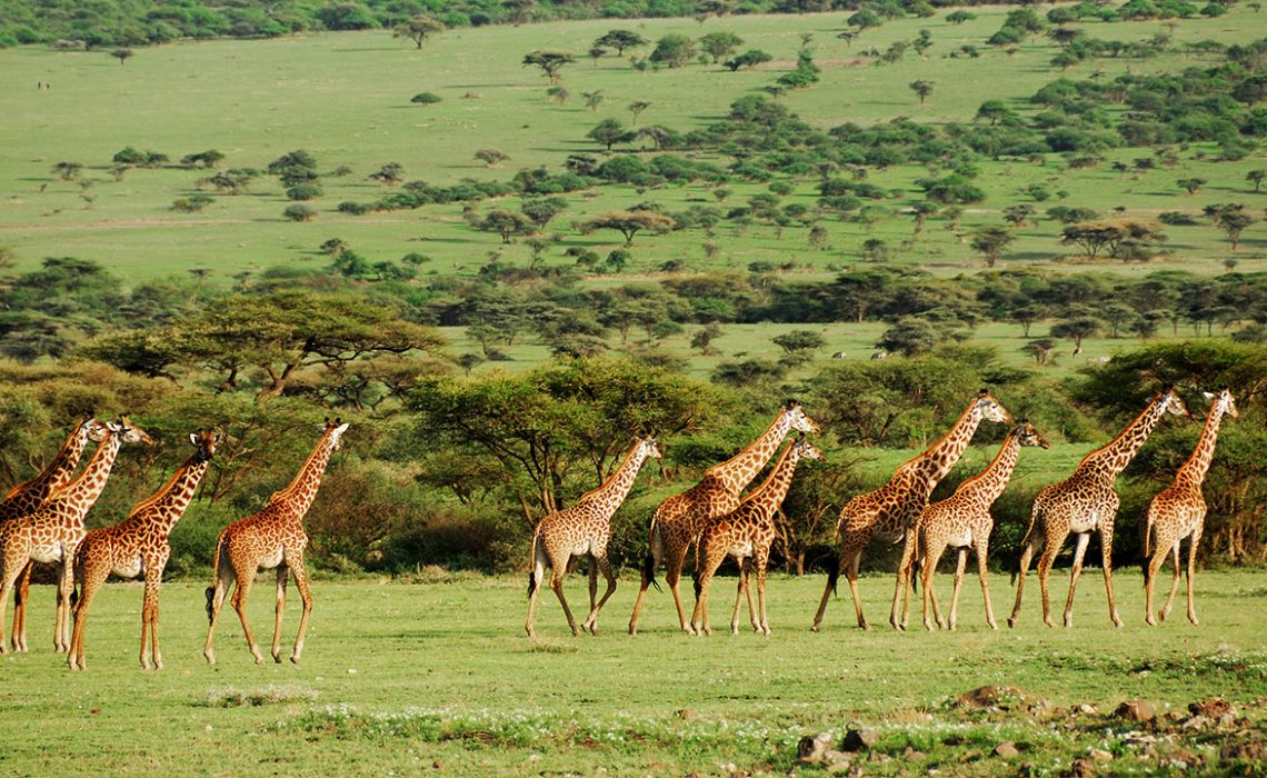 Top 3 National Parks in Tanzania