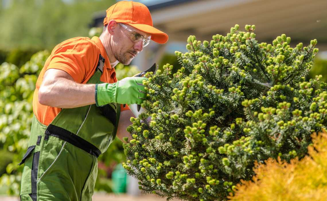Essential Tree Care Tips to Keep It Healthy