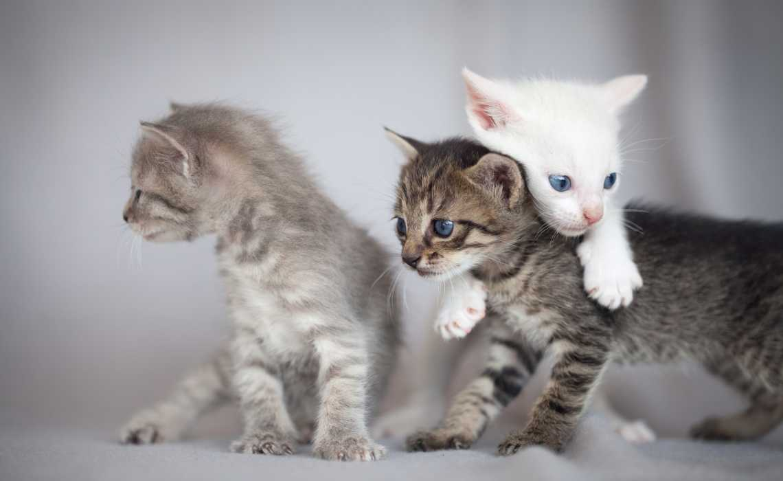 Reasons Why Kittens Misbehave and How to Stop It