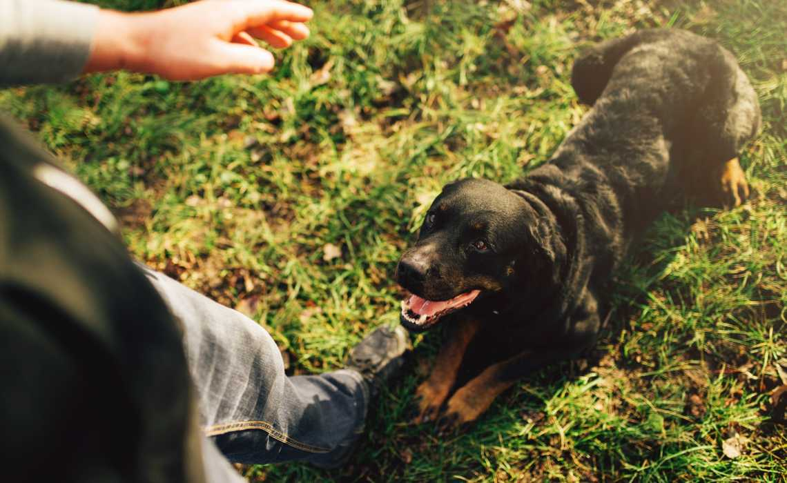 3 Essential Commands You Can Teach Your Dog