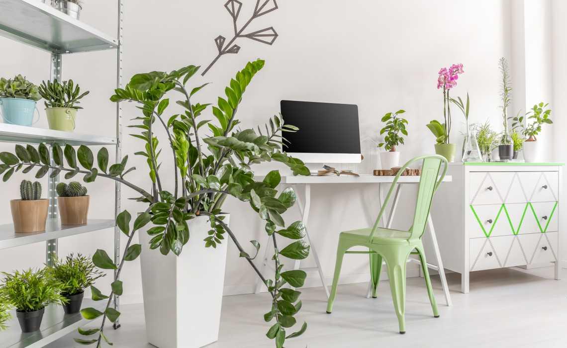 4 Indoor Gardening Tips for Thriving Houseplants